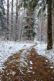 First snow in the autumn forest Stock Image