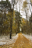First snow in autumn forest Stock Image