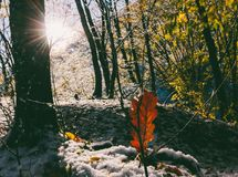 First snow in the autumn forest on a sunny morning Stock Photos