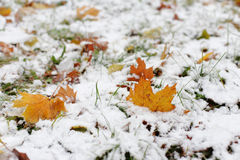 The first snow on the autumn leaves Royalty Free Stock Photo