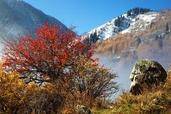 First snow in autumn mountains Royalty Free Stock Images