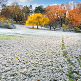 The first snow in the autumn park. Stock Photo