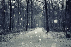 First snow in the autumn park Royalty Free Stock Photography