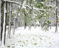 First snow in the autumn park Royalty Free Stock Image