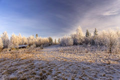 First snow Royalty Free Stock Images