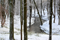 The first snow in the Central park, Kaliningrad. Winter landscap Royalty Free Stock Photos