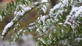 First snow in the city. Cold fall season. First snow in the city. Green leaves in the snow stock video