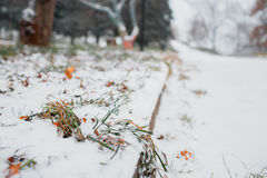 First snow in the city. -covered streets. Autumn cityscape. green leaves in the Stock Images