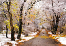 First snow Royalty Free Stock Image