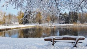 First snow in the city park with ducks. On an icy pond and a bench covered with snow stock video footage