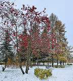 First snow in a city park. Royalty Free Stock Images
