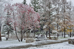 First snow in a city park Royalty Free Stock Photography