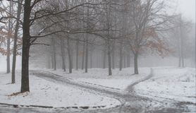 The first snow in the city park. Winter landscape. Foggy morning. Snowfall in a magical forest stock photo