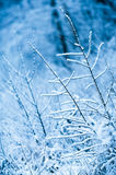 First snow covered branches Stock Images