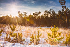 First Snow Covered The Dry Yellow Grass In Forest Stock Images