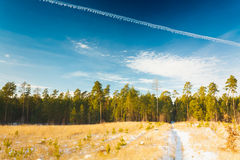 First Snow Covered The Dry Yellow Grass In Forest Stock Photo