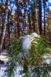First snow. The first snow dropped in the forest Royalty Free Stock Image