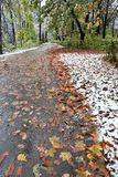 First snow in fall. Climate is changing Stock Images