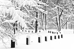 First snow is falling. On a trees in park Stock Images