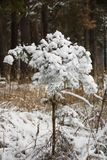A tree in cold and white snow. The first snow fell. All the bushes, trees and grass have become very beautiful and elegant stock photos