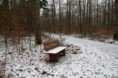 The first snow fell in winter forest.  royalty free stock images