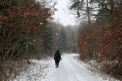 The first snow fell in winter forest.  stock photography