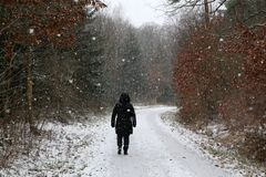 The first snow fell in winter forest.  stock image
