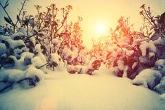 First snow Stock Photos