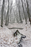 First snow in forest Royalty Free Stock Photo