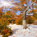First snow in forest royalty free stock image