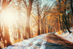First snow in the forest. Beauty world. Road Stock Photo