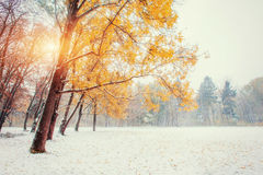 First snow in the forest. Beauty world. Road Royalty Free Stock Images