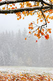 First snow Royalty Free Stock Photo