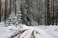 First snow in the forest Royalty Free Stock Images
