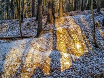 First snow in the forest stock photos