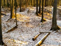 First snow in the forest stock photo