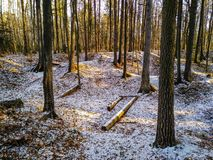 First snow in the forest stock image
