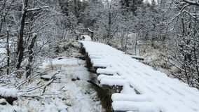 First snow in the forest with wooden bridge Stock Photography