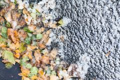 The first snow of frozen puddle with fallen leaves royalty free stock photography