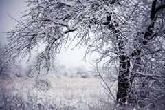 First snow. On grass and braches in Russia Stock Images