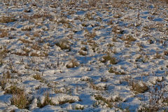 First snow on a grass. First snow covered a white blanket a field grass Stock Photos