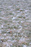 First snow on the grass Royalty Free Stock Image