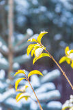 First snow on green branch Royalty Free Stock Photography