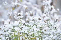 First snow Royalty Free Stock Photography