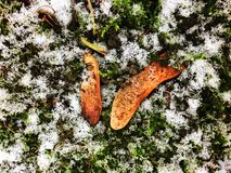 First snow. The first snow on the green grass Royalty Free Stock Photos