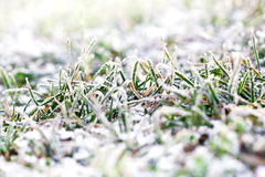 First snow on green grass Royalty Free Stock Photos