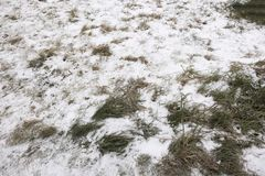 First snow. The first snow on the ground and the last green grass Stock Photography