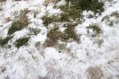 First snow. The first snow on the ground and the last green grass Royalty Free Stock Images