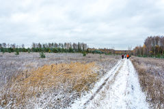 The first snow. A group of tourists walking on snow-covered road. In the foreground dry yellow grass pressed snow Royalty Free Stock Photography