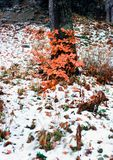 First snow. Illustrations,winter landscape stock photos